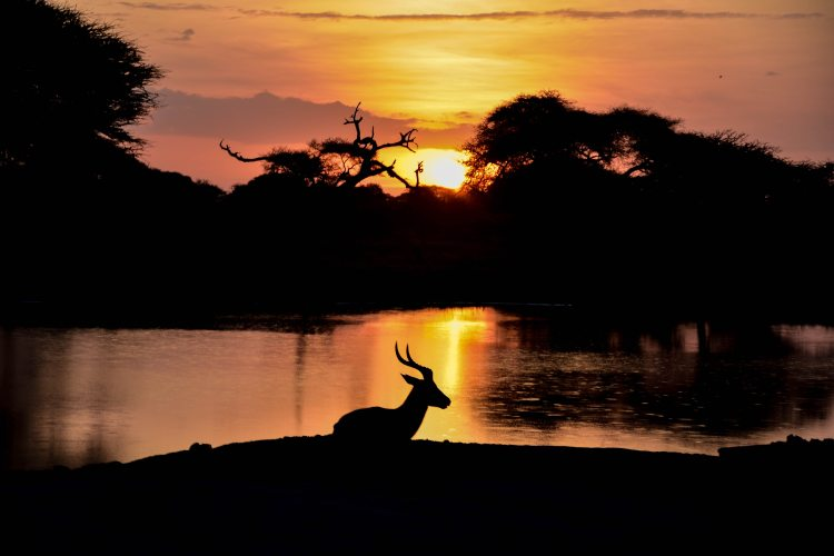 body-of-water-dark-deer-1636018